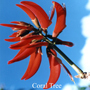 Coral Tree Australian flower essences der Love Remedies