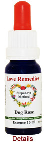 Dog Rose Australian Flower Essences Love Remedies