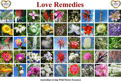 Australian flower essences by Love Remedies